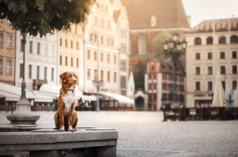 What you need to know about owning a dog in the city