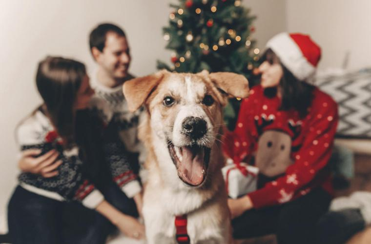 Christmas Activities With Your Dog!
