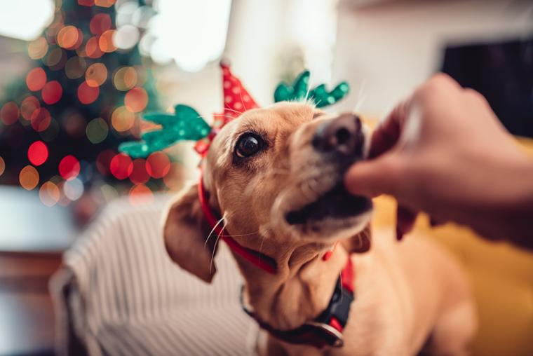 What to avoid feeding your dog this Christmas