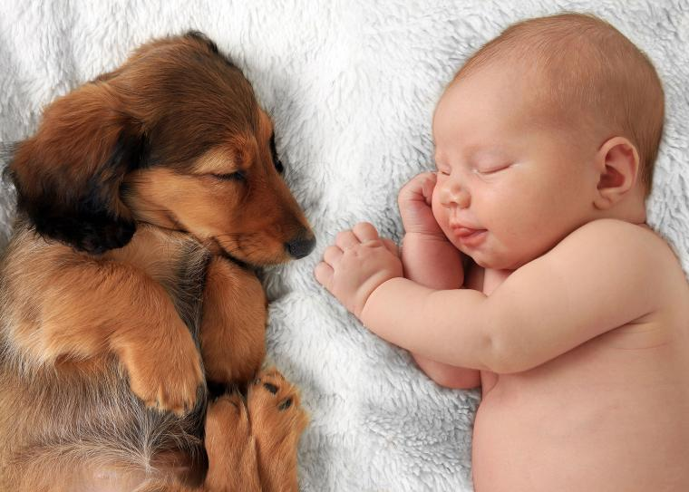 baby and dachshund sleeping