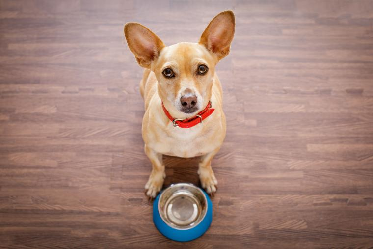 Feeding Tips for dogs