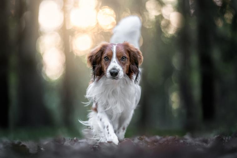 How to keep your dog in tip-top shape this year