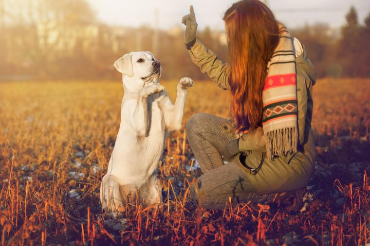 How to improve your dog's behaviour
